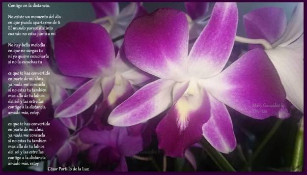 orquidealilam.jpg